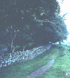 Picture is of an old green road, made so that the Irish could try to get to work in the potato famine years.