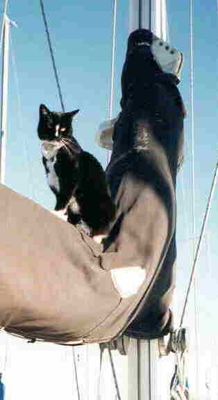 Photo of Pinto on the mast.