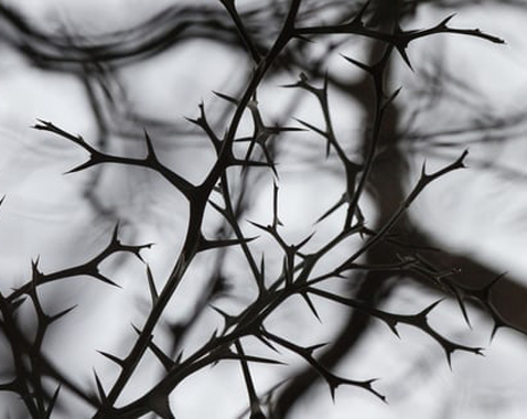 Photo of Tippi Hedren from a movie poster for The Birds.