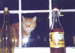 Photo of tomcat looking in a window.